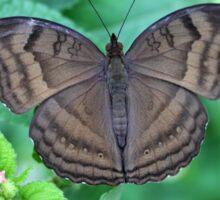 Butterfly 4 Sticker