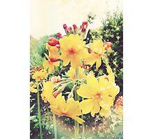 Flower Glow Photographic Print