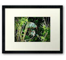 Hidden Deep in the Brush Baby Cattle Egret Framed Print