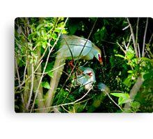 Hidden Deep in the Brush Baby Cattle Egret Canvas Print