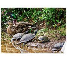 Mother Duck and Father Duck and Baby (TURTLES?????) Poster