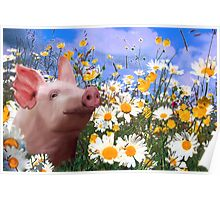 Throwing daisies to the pig Poster