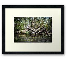 Swampland Louisiana bayou, USA Framed Print