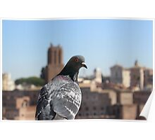 Pigeon in Rome Poster