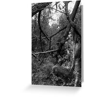 Of Woman, Of Earth IV Greeting Card