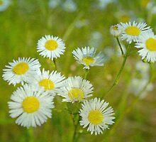 Among the Wildflowers by Scott Mitchell