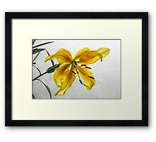 The Yellow Lily Framed Print