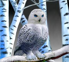 BLUE-EYED SNOW OWL by GLENN HOLBROOK