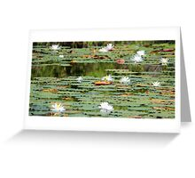Waterlilies In The Morning Greeting Card