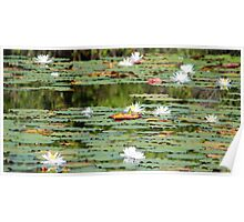 Waterlilies In The Morning Poster