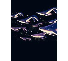 Lantern Whales Photographic Print