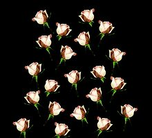 Roses on Black by Elaine Bawden