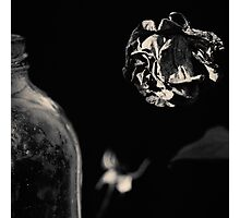 Dead Flowers and Glass #1 Photographic Print