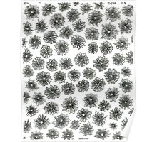 Cone Flower Pattern Poster