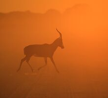 Blesbok Gold - African Wildlife and Sunset Background by LivingWild