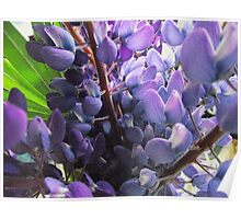 purple lupines Poster