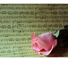 Pink Rose and Music Photographic Print