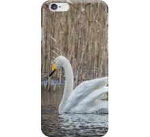 Swan discussion iPhone Case/Skin