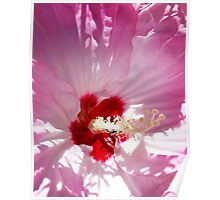 Inside A Pink Hibiscus Poster