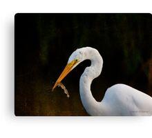 Egret with Shrimp Canvas Print