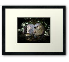 River Otter Framed Print