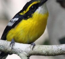 Yellow-Breasted Boatbill Sticker