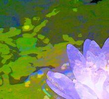 Pond Lily 29 Sticker