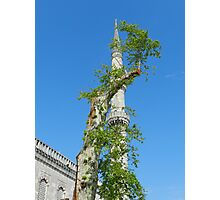 Istanbul - The Minaret and Tree Photographic Print