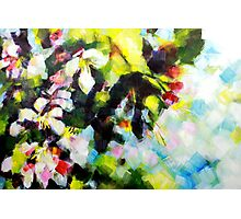 Tree Blossom Painting by Samuel Durkin Photographic Print