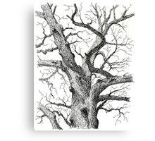 Old Bur Oak in Ink Canvas Print