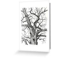 Old Bur Oak in Ink Greeting Card