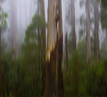 Eucalyptus Tripping by Greg McMahon