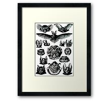 Bats by Haeckel Framed Print