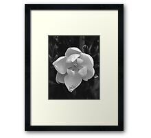 Black and White Magnolia Framed Print