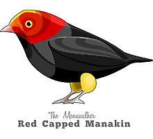 Red Capped Manakin, The Moonwalker Photographic Print