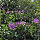 Rhododendrons - London Temple by BlueMidnight