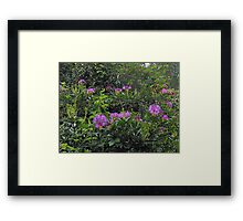Rhododendrons - London Temple Framed Print