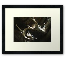 10-Point Buck Skull Framed Print