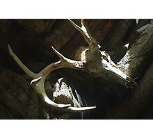 10-Point Buck Skull Photographic Print
