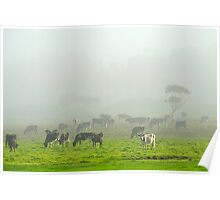 The Herd on a Foggy Morning Poster