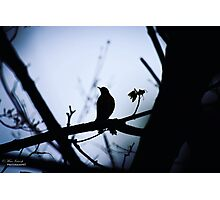 Lonsome bird  Photographic Print