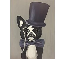 Sir Terrier of the Boston Photographic Print