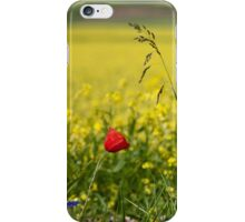 Red poppy in a yellow field iPhone Case/Skin