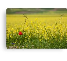 Red poppy in a yellow field Canvas Print