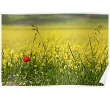 Red poppy in a yellow field Poster