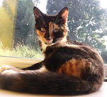 surprised kitten by mindgoop