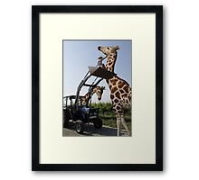 Tickle A Giraffe Framed Print