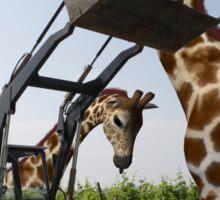 Tickle A Giraffe Sticker