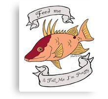 Hogfish diva Canvas Print
