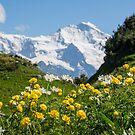 My Swiss... by GOSIA GRZYBEK